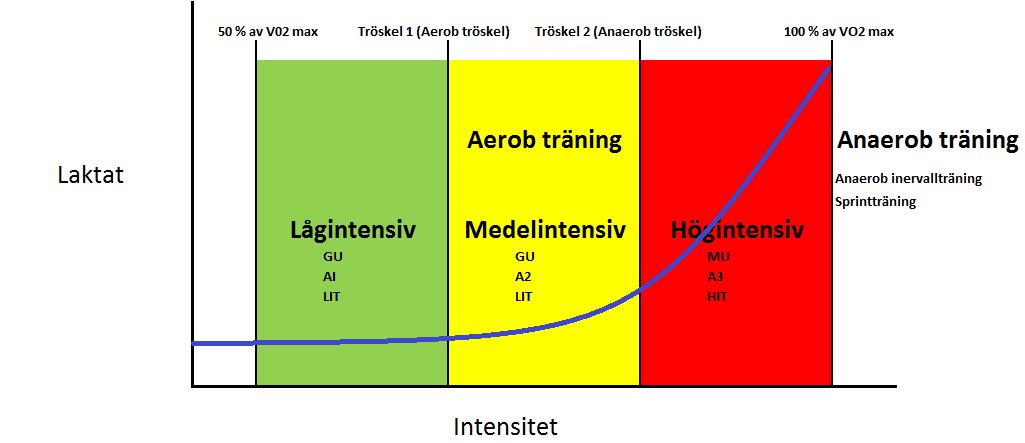 träningszoner, träningszon, laktat